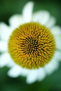 Fotografía botánica /VCrown