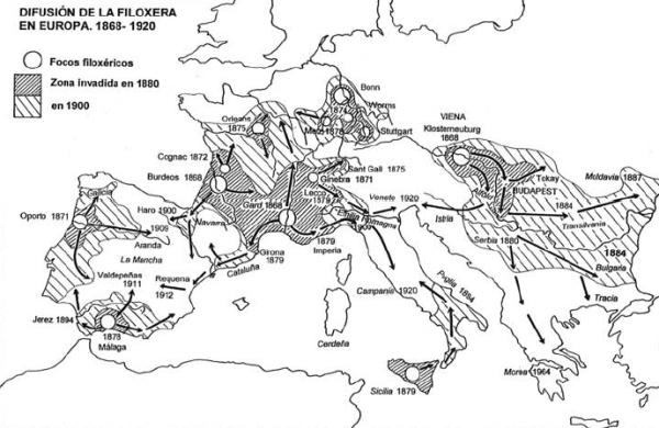 Difusión de la Filoxera en Europa entre 1868 y 1920 / blancolexitimo.wordpress.com