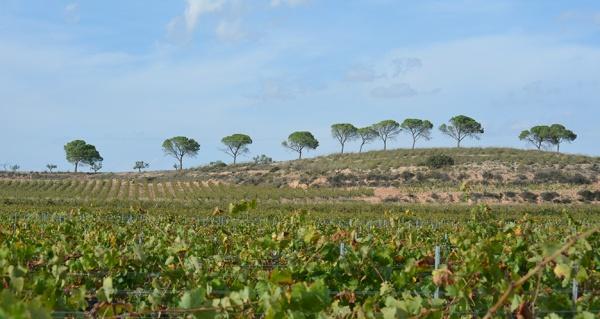 La Denominación de Origen Alicante, heredera de la riqueza mediterránea