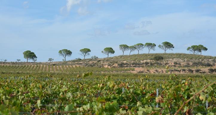 La Bodega Alicantina El Sequé para reportaje DOP Alicante