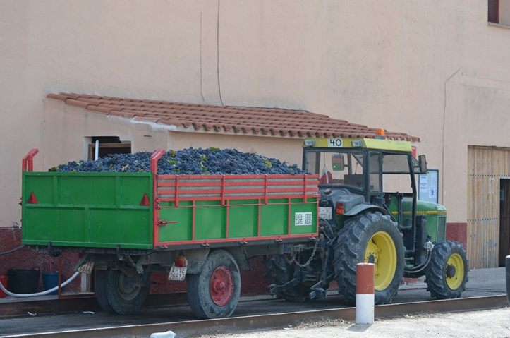 La Bodega Alicantina vendimia DOP Alicante 01