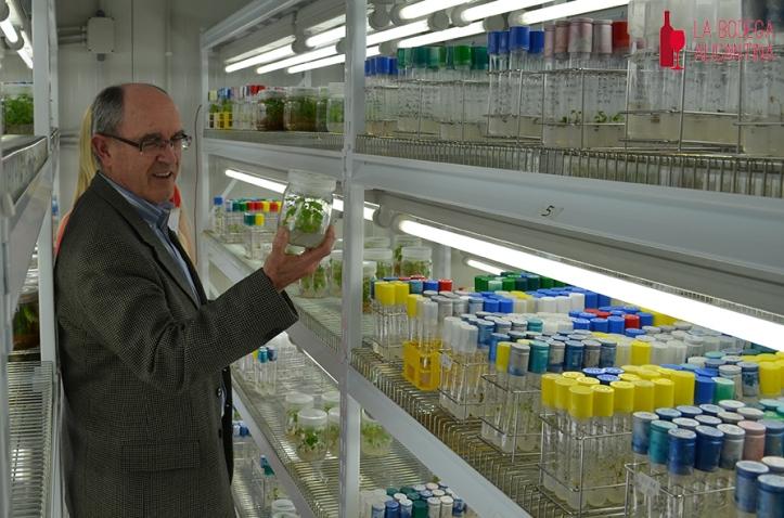 Adrián Martínez Cutillas apuesta por los cruzamientos de Monastrell para obtener nuevas variedades de ciclo más largo y con buenas propiedades organolépticas.