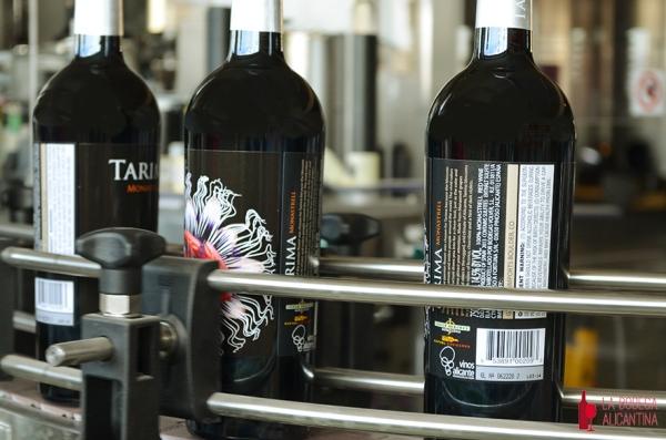 La gran mayoría de la producción de las bodegas Volver de Pinoso con vinos como Tarima, Tarmia Hill o Triga, se exporta a Estados Unidos. /LBA