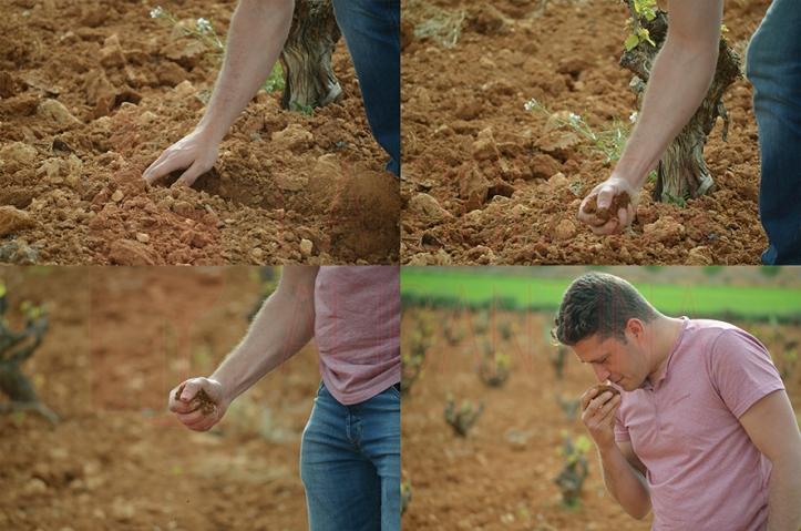 Conocer la tierra donde se asientan sus viñedos, así como trabajar éstos enfocándose al producto final, son dos de las señas de identidad de Vidal Pérez. /LBA